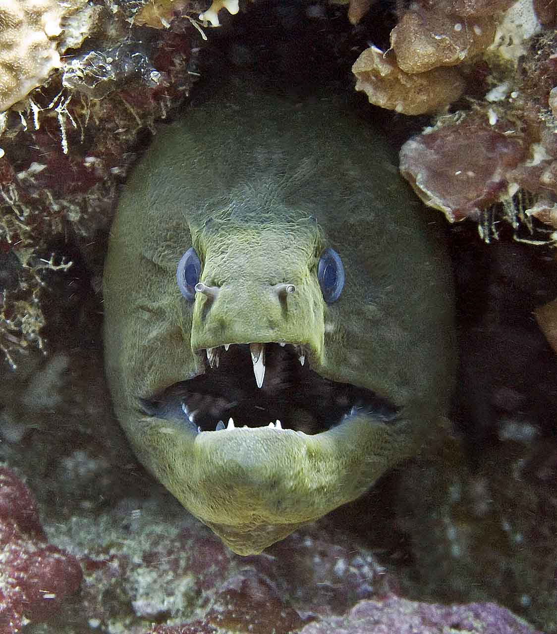 Giant eel - photo#20